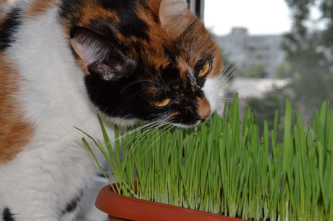Кошачье «мурсибо»