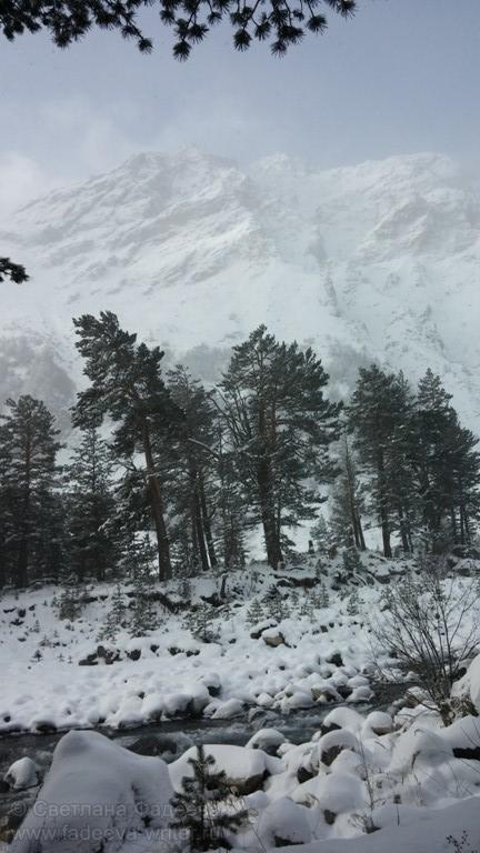 По наклону деревьев можно определить места схода лавин.