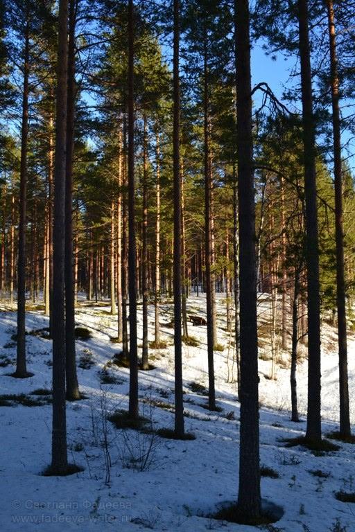 Лучики солнышка ласково щекочут верхушки деревьев.